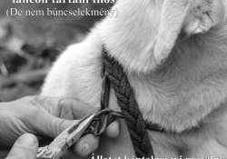 """""""LÁNC-REAKCIÓ"""" Az új állatvédelmi törvényről"""