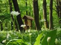 Medvehagyma tanösvény a Vértesben